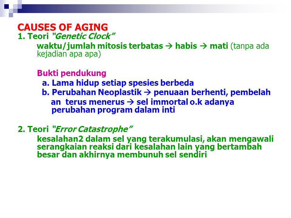 """CAUSES OF AGING 1. Teori """"Genetic Clock"""" waktu/jumlah mitosis terbatas  habis  mati (tanpa ada kejadian apa apa) Bukti pendukung a. Lama hidup setia"""