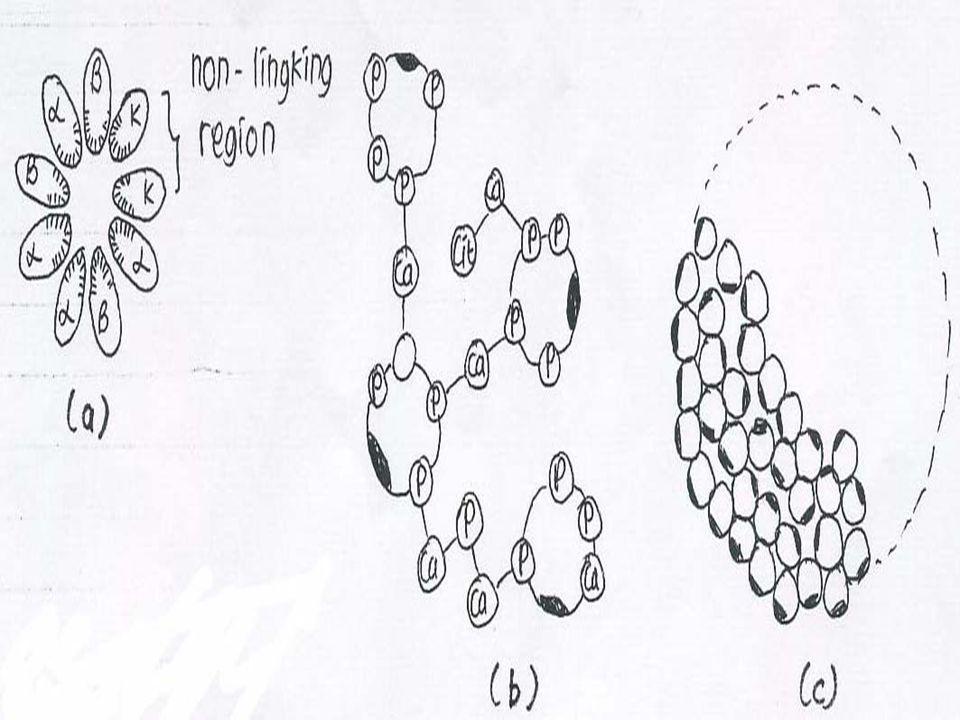 Gambar: Struktur misel kasein secara skematis a) Potongan melintang sub-misel dengan 3 jenis molekul kasein.