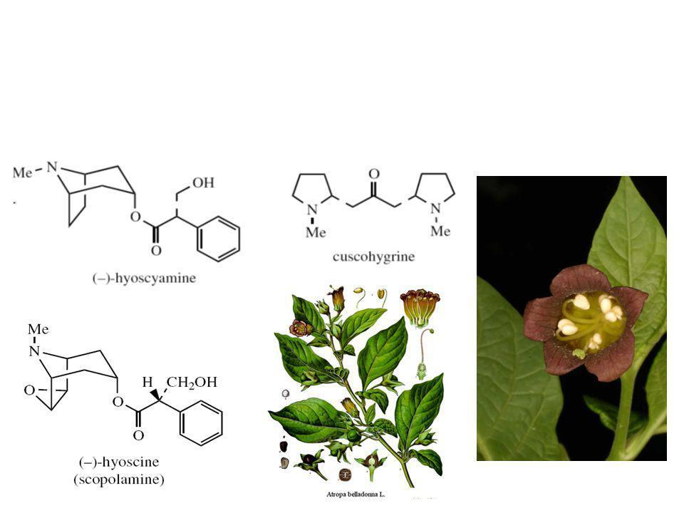 Atropa belladona Herba: 0,3 – 0,6% alkaloid terdiri atas (-)-hyosiamin, (-)-hyosin Akar: 0,4 – 0,8% alkaloid terdiri atas (-)-hiosiamin, (-)-hyosin, (