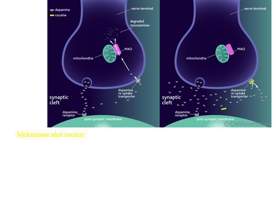 Mekanisme aksi cocain: Cocain memodifikasi aksi dopamin di otak. Cocain berikatan dengan dopamin reuptake-transporter pada presinaptik membran pada do