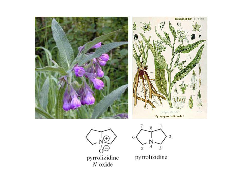 Alkaloid Pirolizidin Symphytum officinale