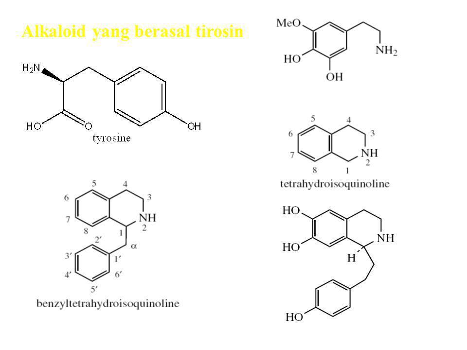 Alkaloid yang berasal tirosin Alkaloid fenil etil amin Alkaloid Feniletil isokuinolin