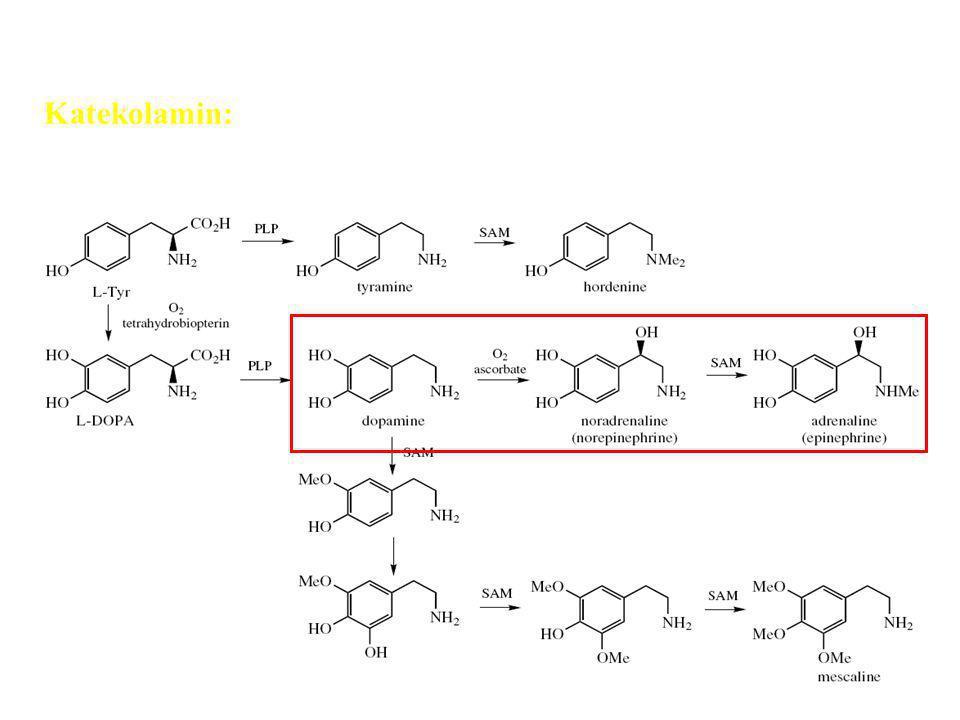 Katekolamin: Neurotansmiter Alkaloid fenil etil amin