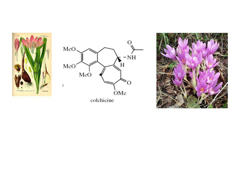 Alkaloid Feniletilisokuinolin Colchicum autumnale Penggunaan: gout (sebagai antiinflamasi) Efek: antimitotik (poliploidi untuk mendapat tanaman variet