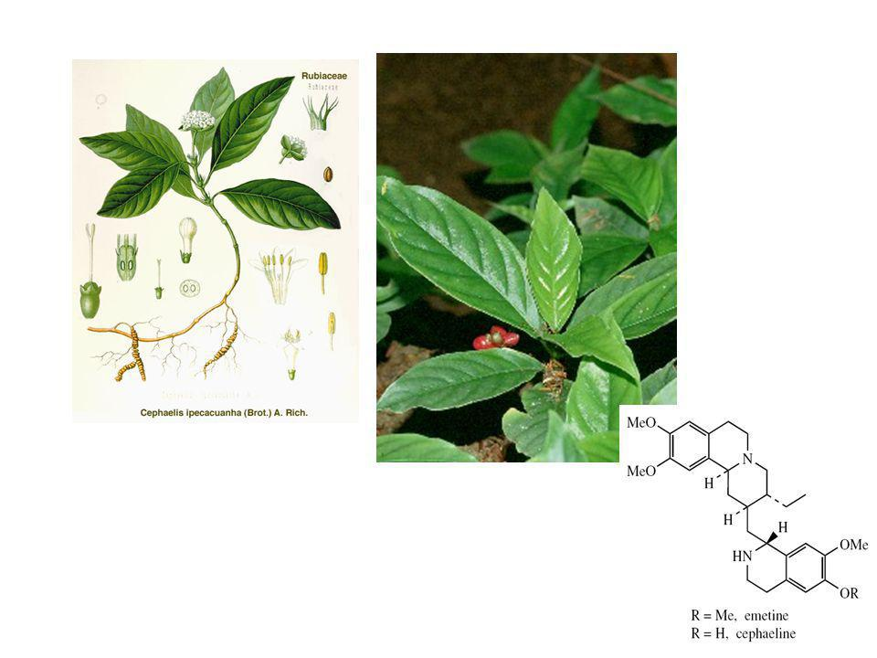 Cephaelis ipecacuanha Alkaloid terpenoid tetrahidroisokuinolin Efek: antiamuba, emetik, ekspektoran, inhibitor sintesis protein (tahap translokasi)