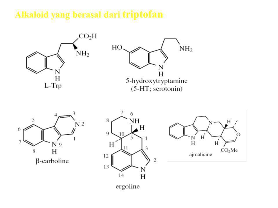 Alkaloid yang berasal dari triptofan Alkaloid terpen indol