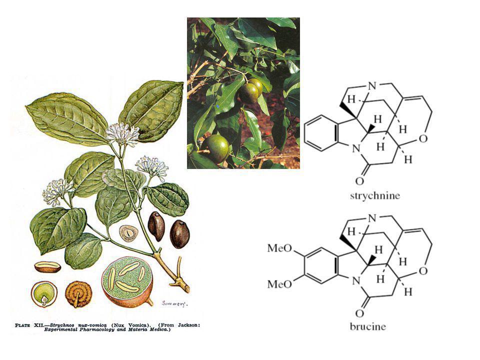 Strychnos nux-vomica