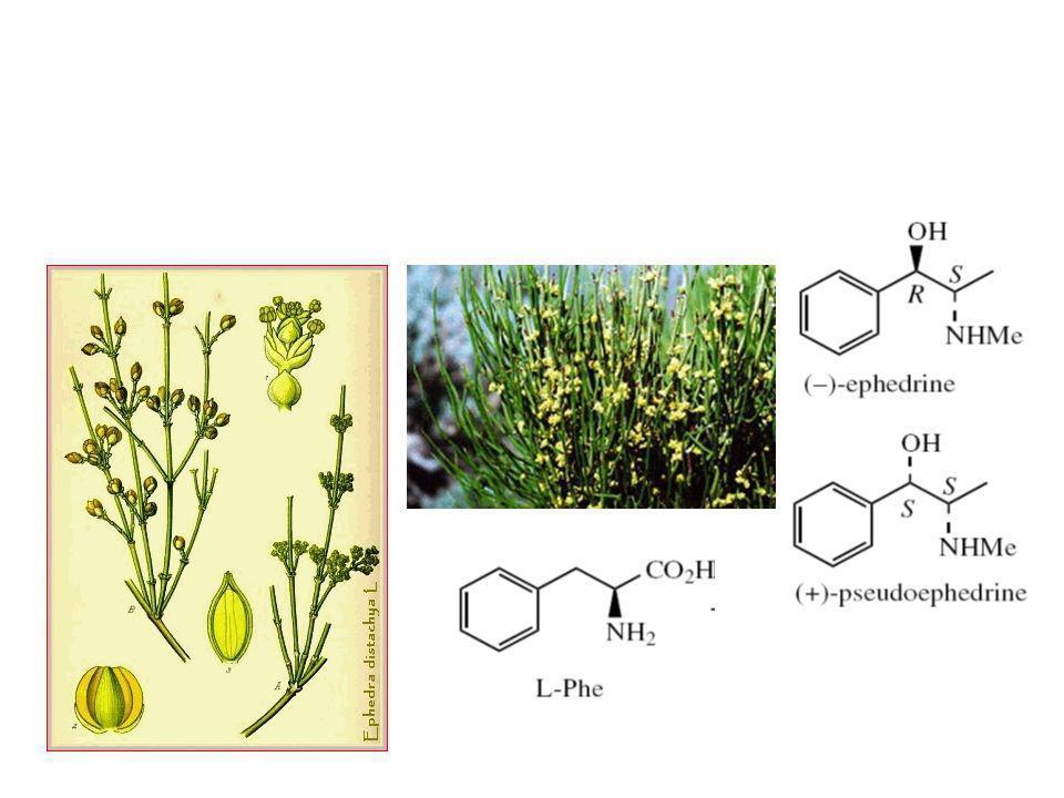 Alkaloid yang berasal dari fenilalanin Ephedra sp.