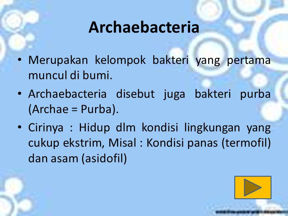 Eubakteria Eubacteria atau dikenal juga Bakteri sebenarnya.