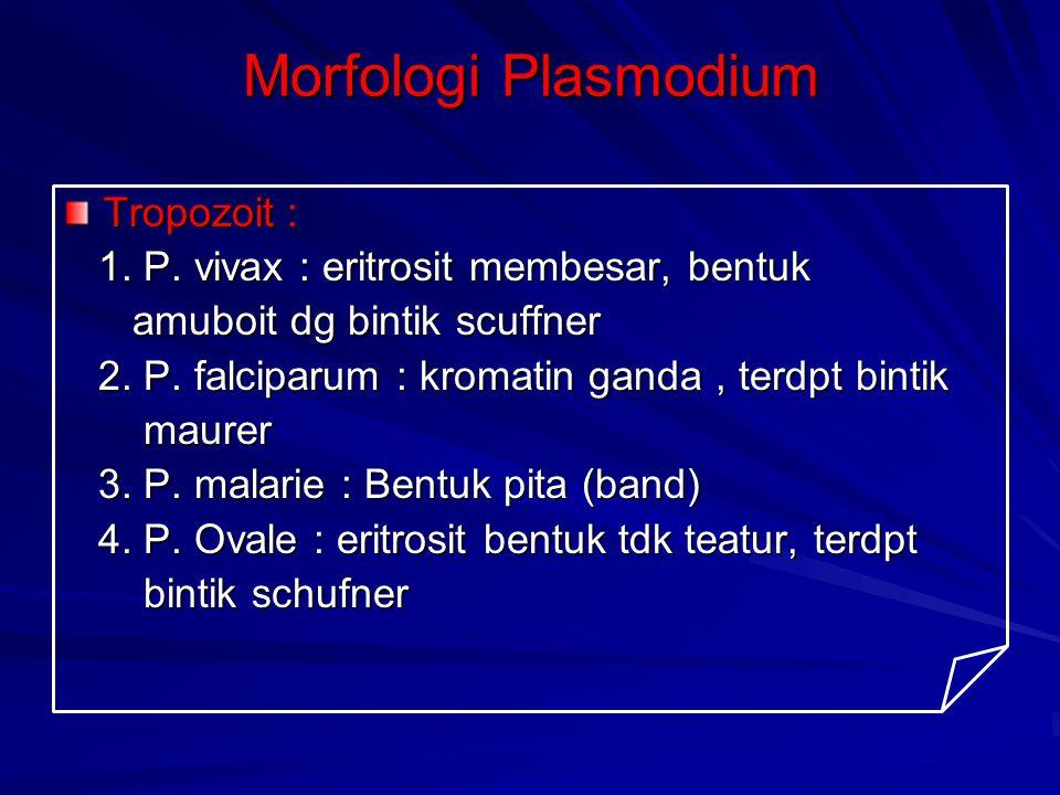 Morfologi Plasmodium Tropozoit : 1. P. vivax : eritrosit membesar, bentuk 1. P. vivax : eritrosit membesar, bentuk amuboit dg bintik scuffner amuboit