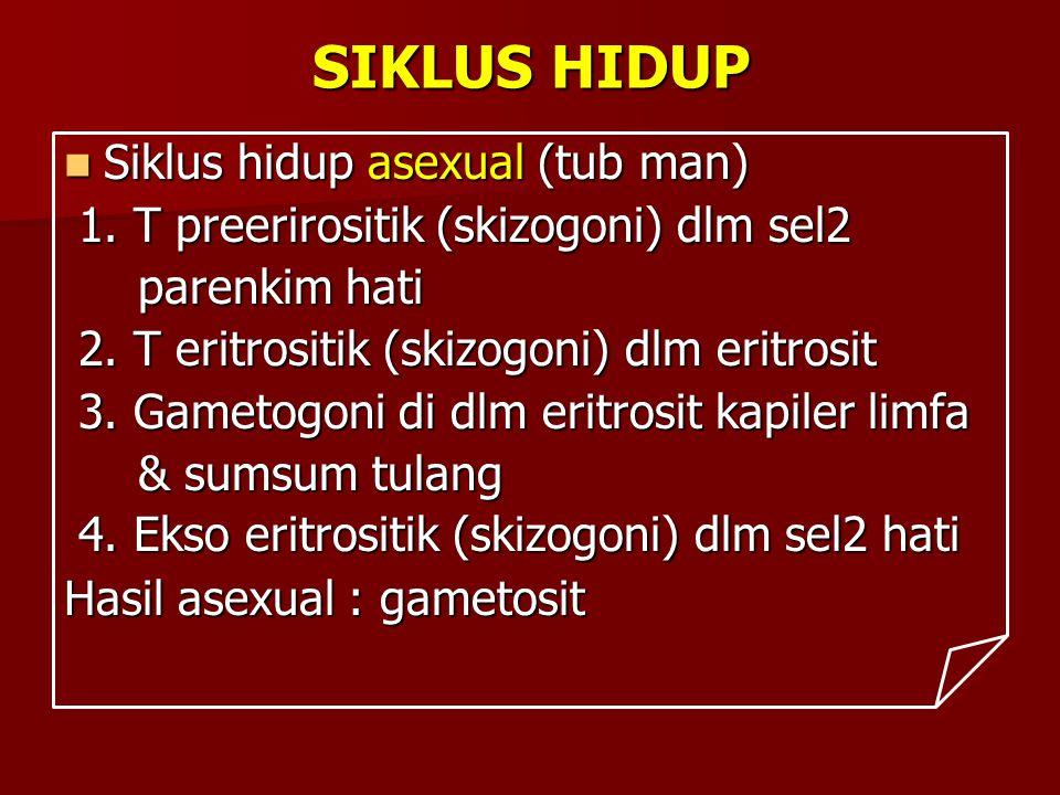 SIKLUS HIDUP Siklus hidup asexual (tub man) Siklus hidup asexual (tub man) 1. T preerirositik (skizogoni) dlm sel2 1. T preerirositik (skizogoni) dlm