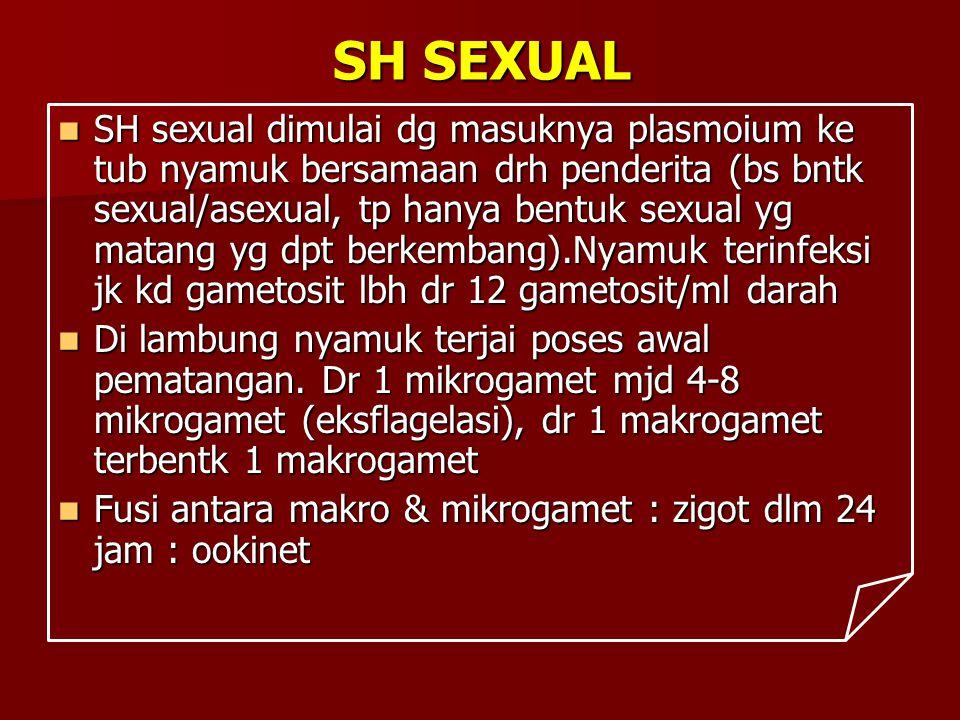 SH SEXUAL SH sexual dimulai dg masuknya plasmoium ke tub nyamuk bersamaan drh penderita (bs bntk sexual/asexual, tp hanya bentuk sexual yg matang yg d