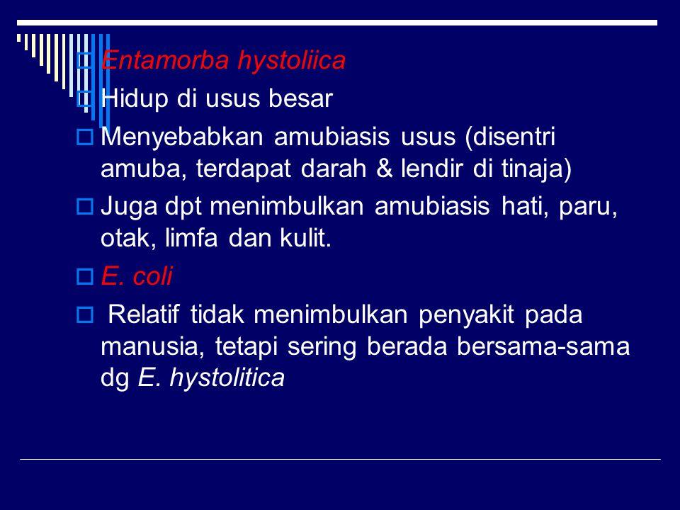  Entamorba hystoliica  Hidup di usus besar  Menyebabkan amubiasis usus (disentri amuba, terdapat darah & lendir di tinaja)  Juga dpt menimbulkan a