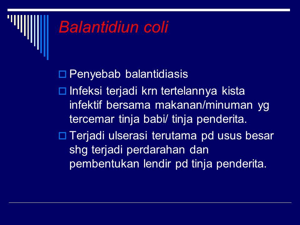 Balantidiun coli  Penyebab balantidiasis  Infeksi terjadi krn tertelannya kista infektif bersama makanan/minuman yg tercemar tinja babi/ tinja pende