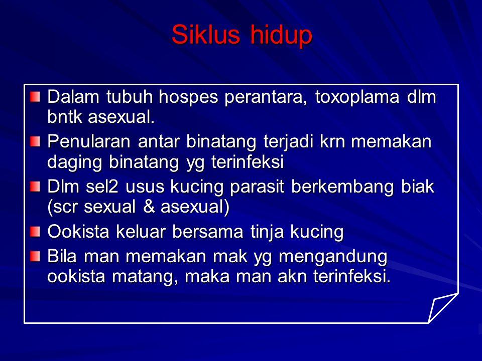 SIKLUS HIDUP Siklus hidup asexual (tub man) Siklus hidup asexual (tub man) 1.