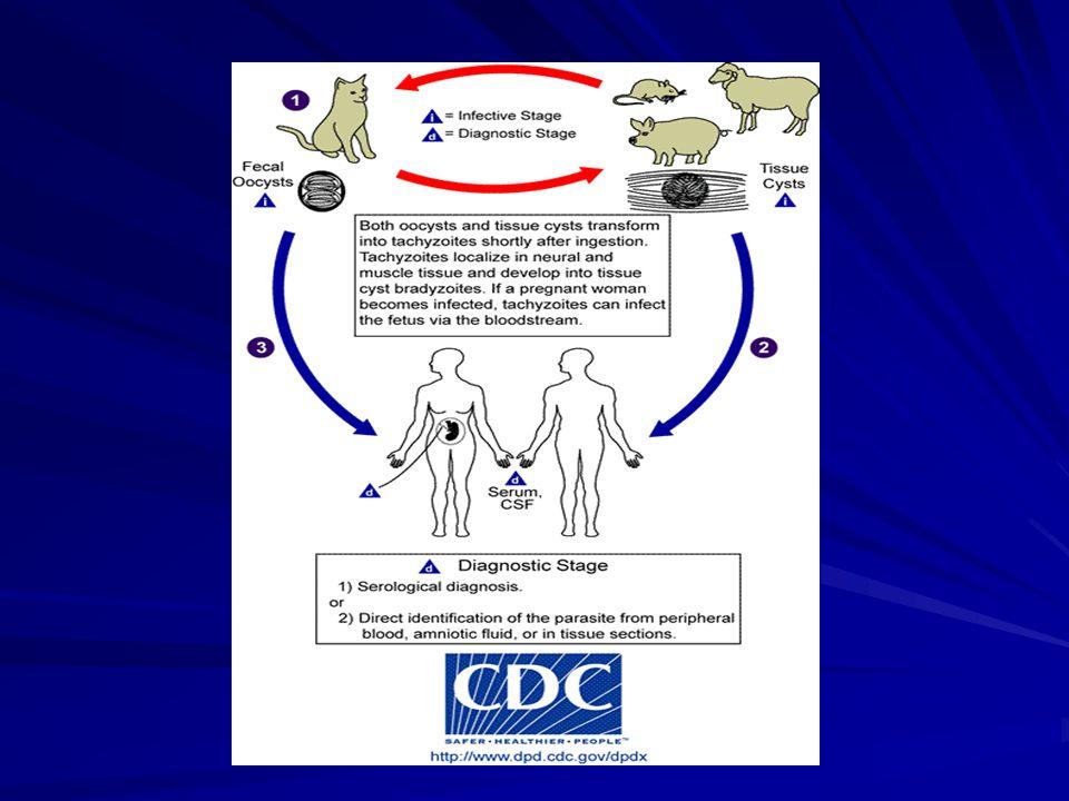 Plasmodium H dfnt : anopheles H perantara : manusia Siklus hidup sexual (sporogoni) di tub nyamuk SH asexual (skizogoni) di tub man (hsl gemetosit) Macam plasmodium P.