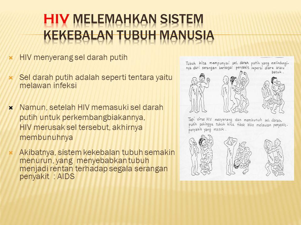  HIV menyerang sel darah putih  Sel darah putih adalah seperti tentara yaitu melawan infeksi  Namun, setelah HIV memasuki sel darah putih untuk perkembangbiakannya, HIV merusak sel tersebut, akhirnya membunuhnya  Akibatnya, sistem kekebalan tubuh semakin menurun, yang menyebabkan tubuh menjadi rentan terhadap segala serangan penyakit : AIDS CD4