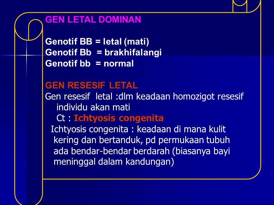 GEN LETAL DOMINAN Genotif BB = letal (mati) Genotif Bb = brakhifalangi Genotif bb = normal GEN RESESIF LETAL Gen resesif letal :dlm keadaan homozigot