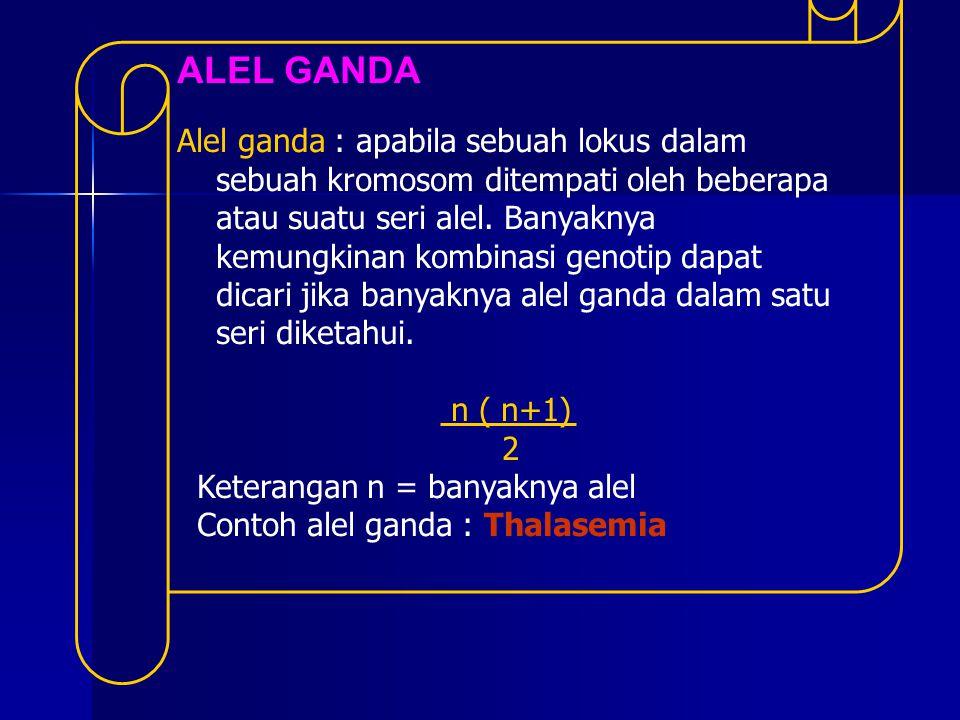 ALEL GANDA Alel ganda : apabila sebuah lokus dalam sebuah kromosom ditempati oleh beberapa atau suatu seri alel. Banyaknya kemungkinan kombinasi genot