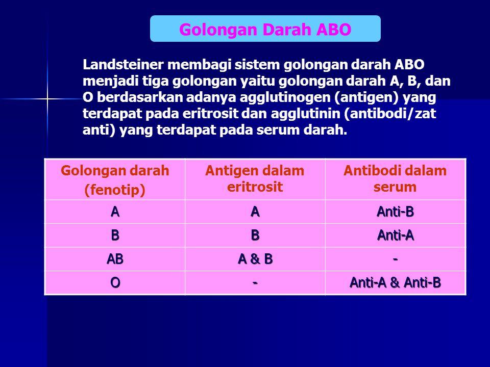 Golongan Darah ABO Golongan darah (fenotip) Antigen dalam eritrosit Antibodi dalam serum AAAnti-B BBAnti-A AB A & B - O- Anti-A & Anti-B Landsteiner m