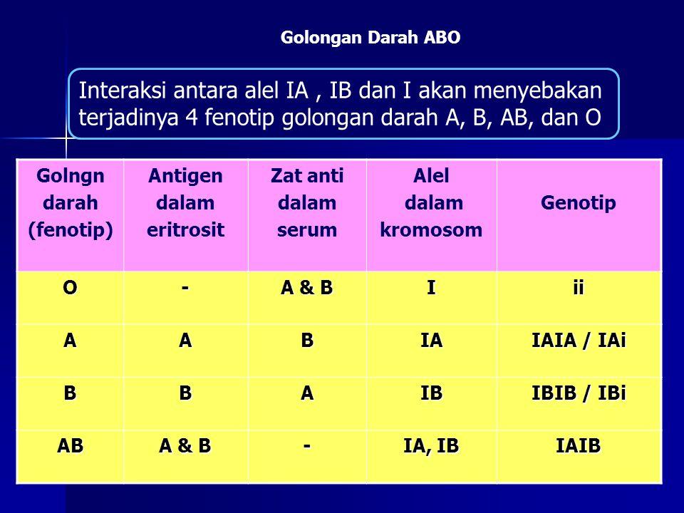 Interaksi antara alel IA, IB dan I akan menyebakan terjadinya 4 fenotip golongan darah A, B, AB, dan O Golongan Darah ABO Golngn darah (fenotip) Antig