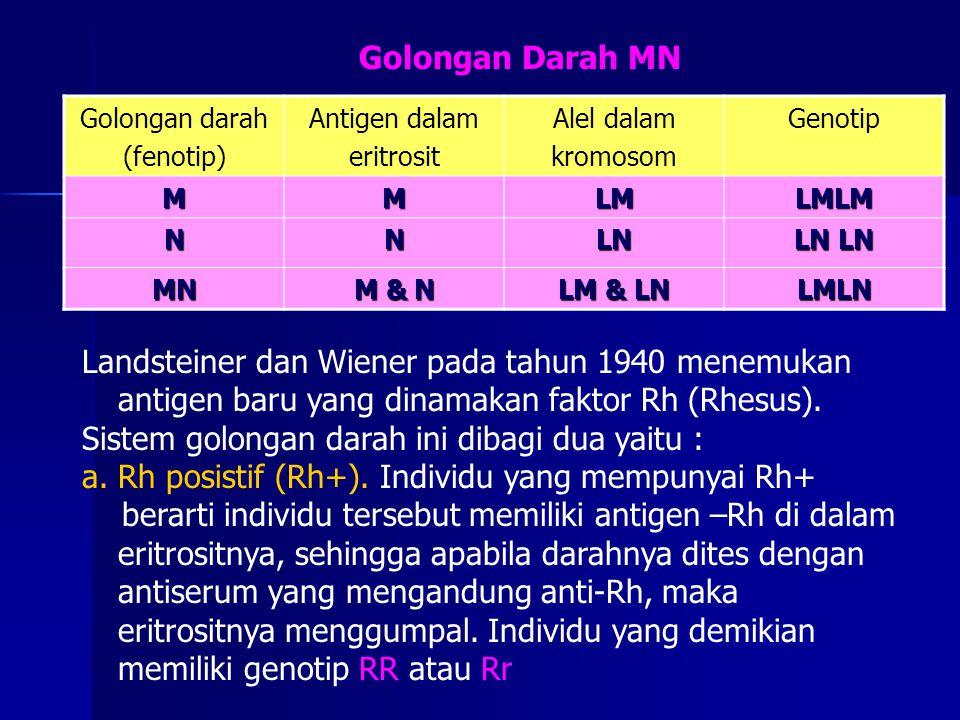 Golongan darah (fenotip) Antigen dalam eritrosit Alel dalam kromosom Genotip MMLMLMLM NNLN LN LN MN M & N LM & LN LMLN Landsteiner dan Wiener pada tah