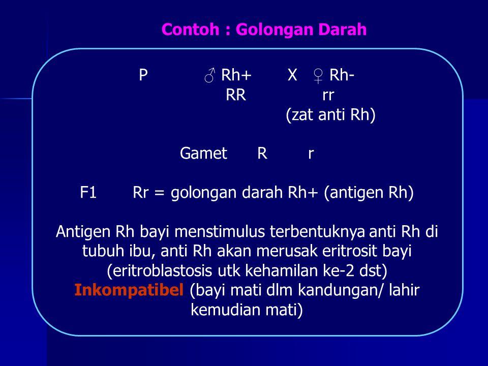 P ♂ Rh+ X ♀ Rh- RR rr (zat anti Rh) Gamet R r F1 Rr = golongan darah Rh+ (antigen Rh) Antigen Rh bayi menstimulus terbentuknya anti Rh di tubuh ibu, a
