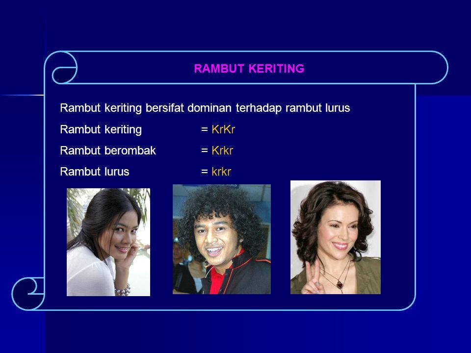 RAMBUT KERITING Rambut keriting bersifat dominan terhadap rambut lurus Rambut keriting = KrKr Rambut berombak= Krkr Rambut lurus = krkr