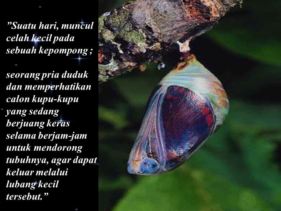 """Suatu hari, muncul celah kecil pada sebuah kepompong ; seorang pria duduk dan memperhatikan calon kupu-kupu yang sedang berjuang keras selama berjam-"