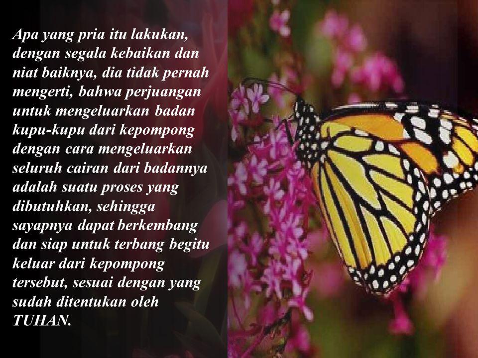 Apa yang pria itu lakukan, dengan segala kebaikan dan niat baiknya, dia tidak pernah mengerti, bahwa perjuangan untuk mengeluarkan badan kupu-kupu dar