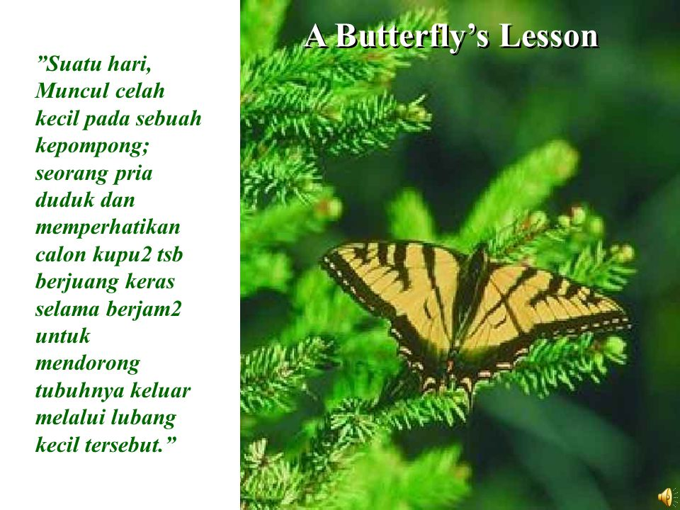 A Butterfly's Lesson Suatu hari, Muncul celah kecil pada sebuah kepompong; seorang pria duduk dan memperhatikan calon kupu2 tsb berjuang keras selama berjam2 untuk mendorong tubuhnya keluar melalui lubang kecil tersebut.