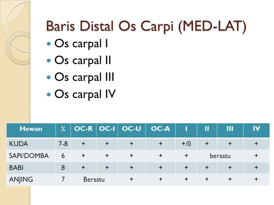 Baris Distal Os Carpi (MED-LAT) Os carpal I Os carpal II Os carpal III Os carpal IV Hewan  OC-ROC-IOC-UOC-AIIIIIIIV KUDA7-8+++++/0+++ SAPI/DOMBA6+++++bersatu+ BABI8++++++++ ANJING7Bersatu++++++