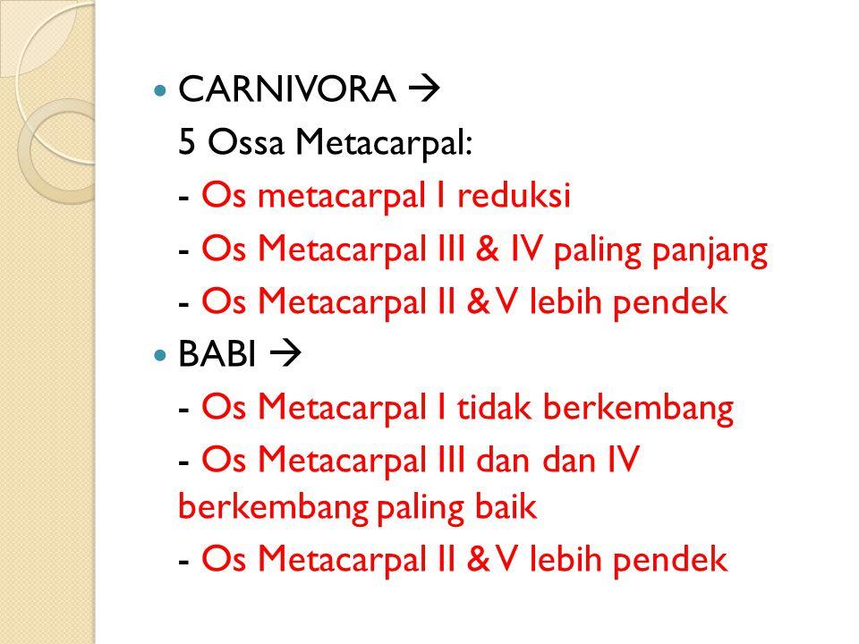 CARNIVORA  5 Ossa Metacarpal: - Os metacarpal I reduksi - Os Metacarpal III & IV paling panjang - Os Metacarpal II & V lebih pendek BABI  - Os Metacarpal I tidak berkembang - Os Metacarpal III dan dan IV berkembang paling baik - Os Metacarpal II & V lebih pendek