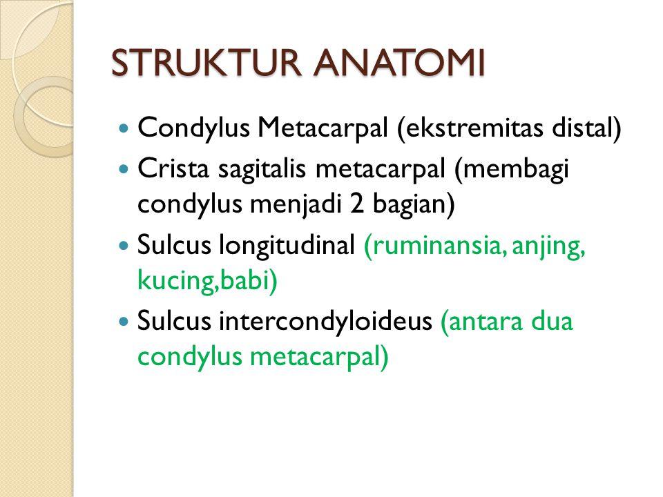 STRUKTUR ANATOMI Condylus Metacarpal (ekstremitas distal) Crista sagitalis metacarpal (membagi condylus menjadi 2 bagian) Sulcus longitudinal (ruminansia, anjing, kucing,babi) Sulcus intercondyloideus (antara dua condylus metacarpal)