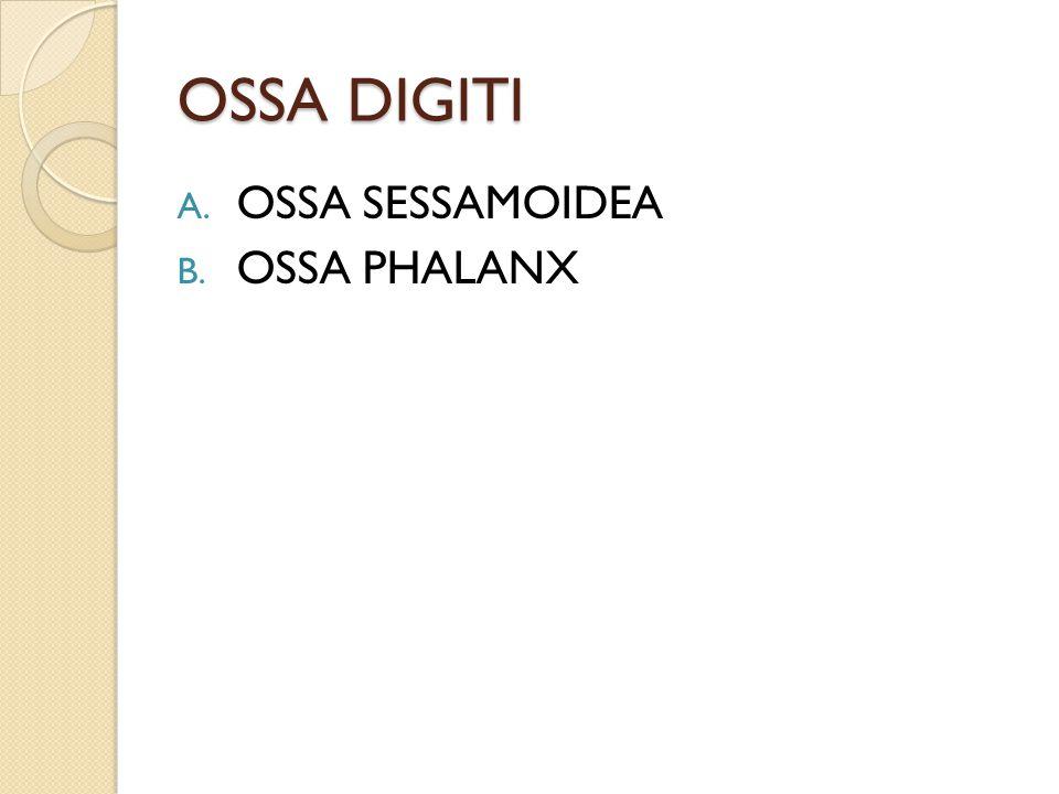 OSSA DIGITI A. OSSA SESSAMOIDEA B. OSSA PHALANX