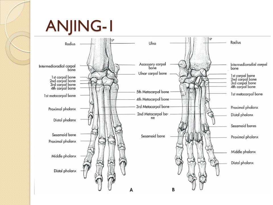 ANJING-1