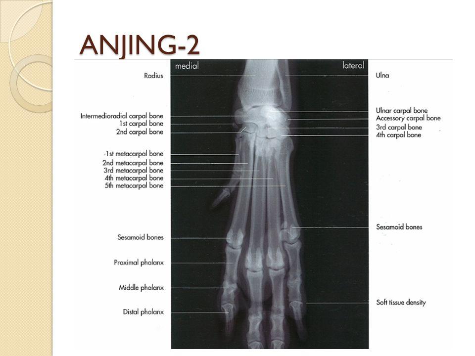 ANJING-2