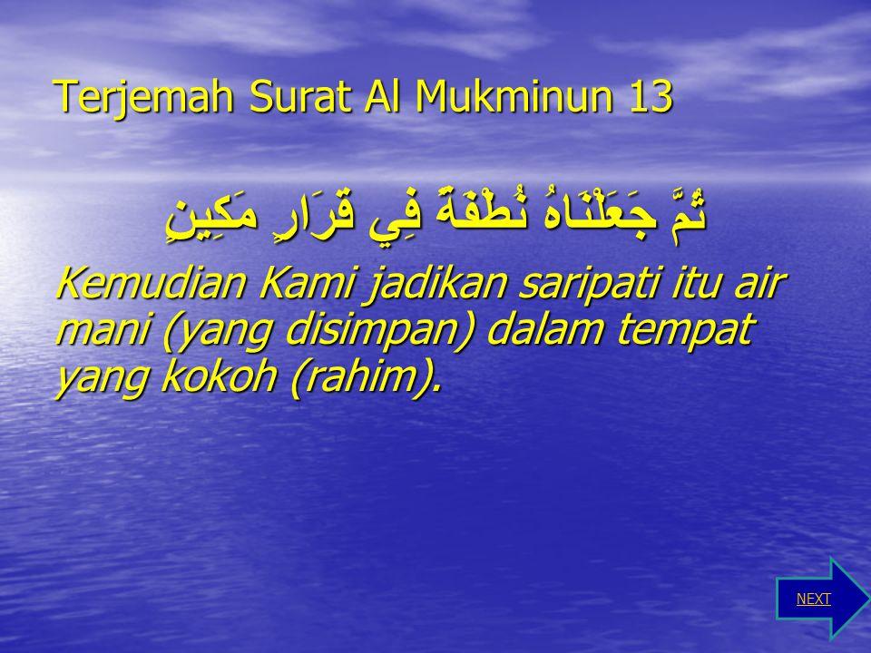 Terjemah Surat Al Mukminun 12 وَلَقَدْ خَلَقْنَا الْإِنْسَانَ مِنْ سُلَالَةٍ مِنْ طِينٍ Dan sungguh, Kami telah menciptakan manusia dari saripati (ber