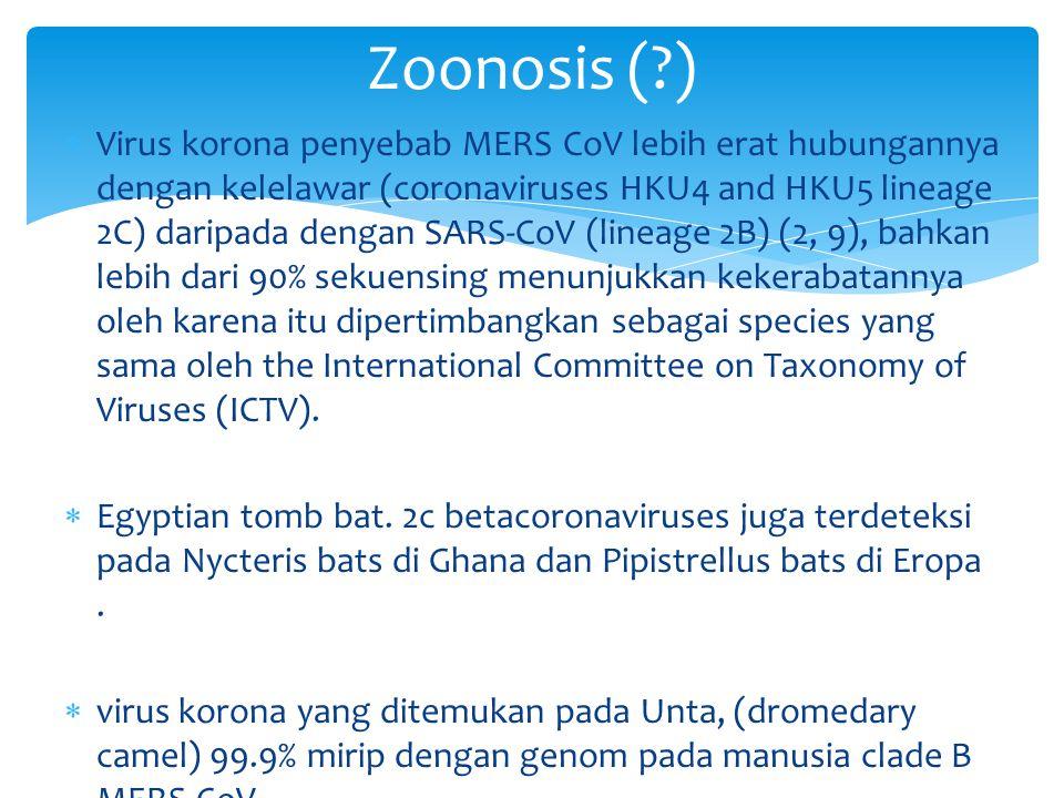  Virus korona penyebab MERS CoV lebih erat hubungannya dengan kelelawar (coronaviruses HKU4 and HKU5 lineage 2C) daripada dengan SARS-CoV (lineage 2B) (2, 9), bahkan lebih dari 90% sekuensing menunjukkan kekerabatannya oleh karena itu dipertimbangkan sebagai species yang sama oleh the International Committee on Taxonomy of Viruses (ICTV).