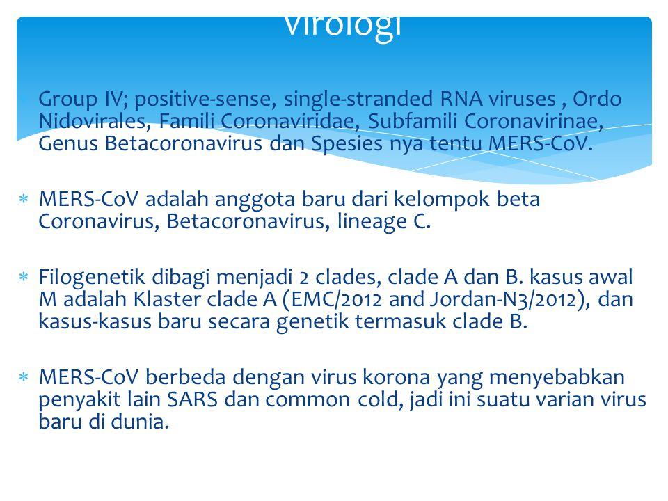  Group IV; positive-sense, single-stranded RNA viruses, Ordo Nidovirales, Famili Coronaviridae, Subfamili Coronavirinae, Genus Betacoronavirus dan Sp