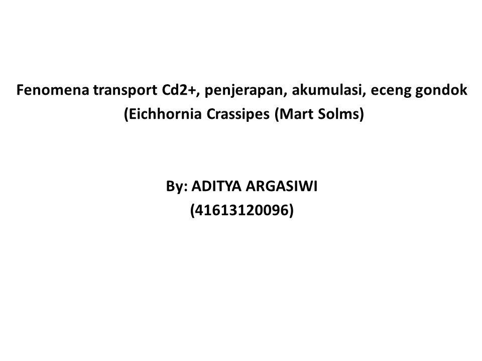 Fenomena transport Cd2+, penjerapan, akumulasi, eceng gondok (Eichhornia Crassipes (Mart Solms) By: ADITYA ARGASIWI (41613120096)