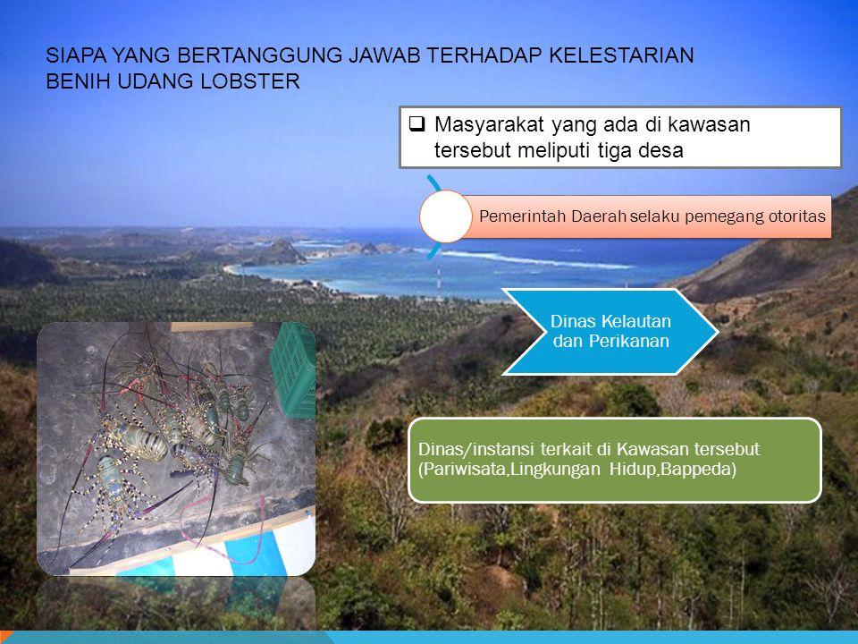 SIAPA YANG BERTANGGUNGJAWAB TERHADAP KELESTARIAN BIBIT LOBSTER Masyarakat di tiga desa sebagai pelaksana dengan jumlah penduduk 5162 Jiwa, 1583 KK/pelaku bekerjasama dengan pemagku kepentingan terhadap kawasan konservasi Teluk Bumbang.