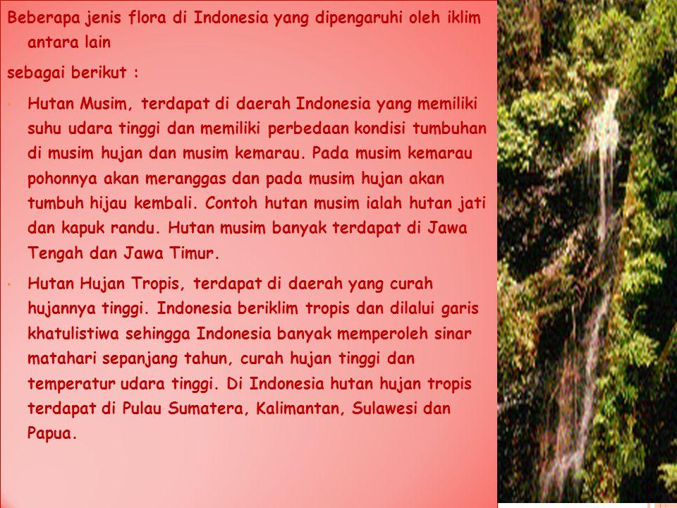 Beberapa jenis flora di Indonesia yang dipengaruhi oleh iklim antara lain sebagai berikut : Hutan Musim, terdapat di daerah Indonesia yang memiliki su