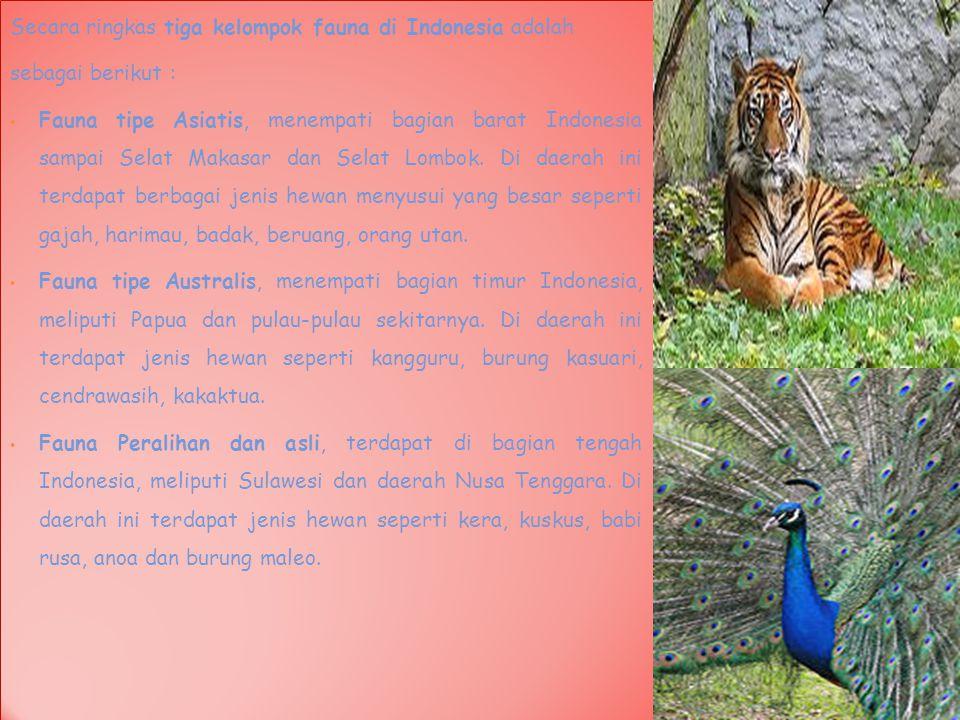 Secara ringkas tiga kelompok fauna di Indonesia adalah sebagai berikut : Fauna tipe Asiatis, menempati bagian barat Indonesia sampai Selat Makasar dan