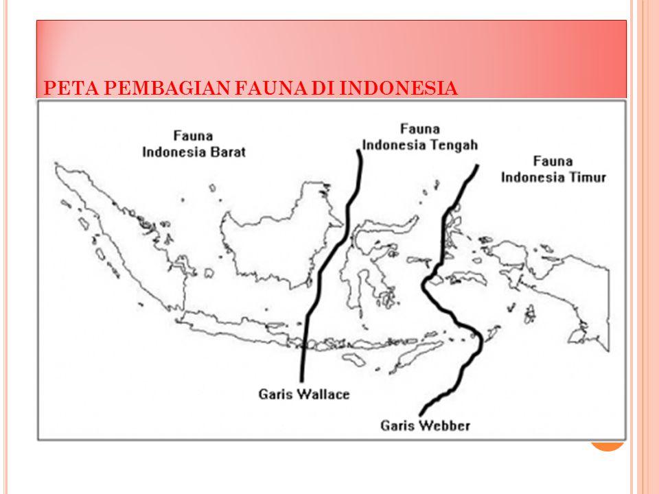 PETA PEMBAGIAN FAUNA DI INDONESIA