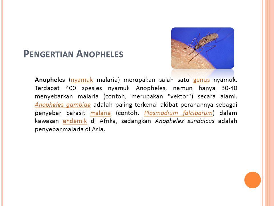 P ENGERTIAN A NOPHELES Anopheles (nyamuk malaria) merupakan salah satu genus nyamuk.