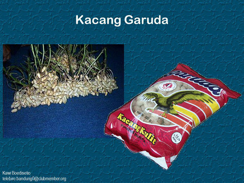 Kawi Boedisetio telebiro.bandung0@clubmember.org Kacang Garuda
