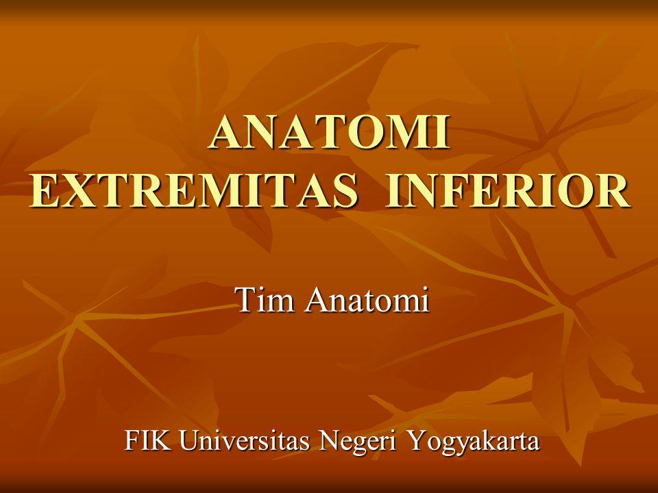 ANATOMI EXTREMITAS INFERIOR Tim Anatomi FIK Universitas Negeri Yogyakarta
