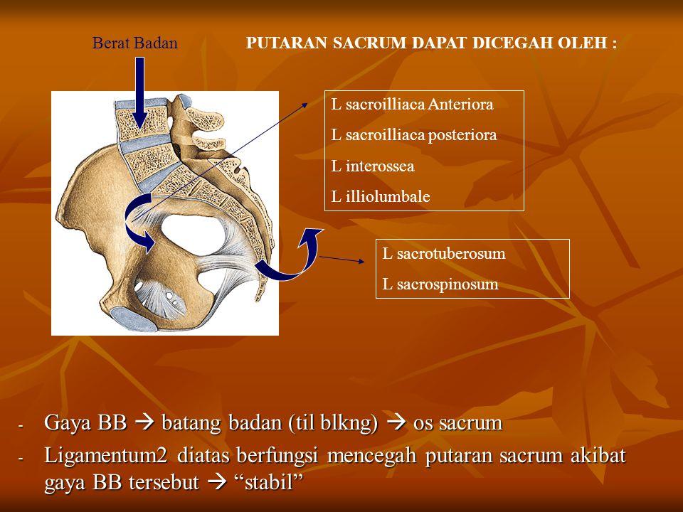 "- Gaya BB  batang badan (til blkng)  os sacrum - Ligamentum2 diatas berfungsi mencegah putaran sacrum akibat gaya BB tersebut  ""stabil"" Berat Badan"