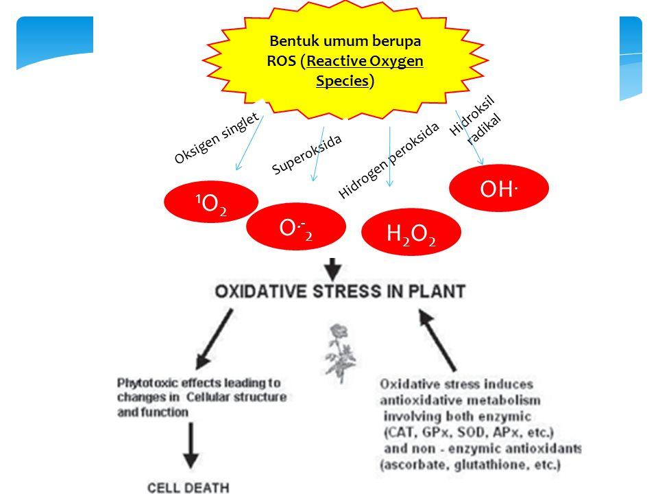 Fotolisis air menghasilkan H+ dan O2 Pada kondisi ini oksigen berada pada kondisi bentuk dasarnya yaitu Oksigen triplet Klorofil menyerap cahaya sehingga tereksitasi  tingkat energi rendah (CHL)  klorofil dengan tingkat energi tinggi (CHL*) Klorofil triplet Pada saat klorofil tereksitasi, 4 kemungkinan : 1.Energi dilepaskan dalam bentuk panas 2.Energi dimanfaatkan untuk fotokimia 3.Energi dilepaskan secara perlahan (fluorescense) 4.Energi disalurkan ke molekul lain seperti oksigen membentuk ROS yang bersifat destructive Pembentukan oksigen singlet Presented at May 28 '13